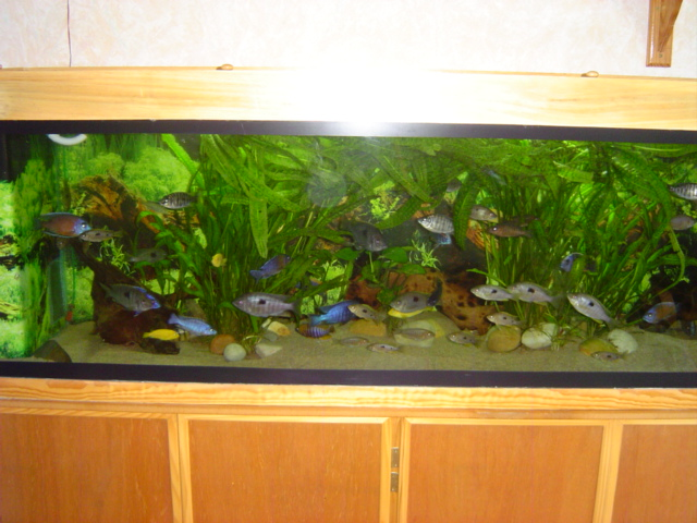 Aquarium bjl80 for Aquarium bac
